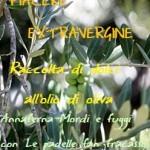 logo contest raccolta olio oliva